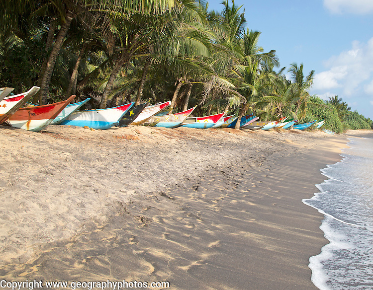 Brightly coloured fishing canoes under coconut palm trees of tropical sandy beach, Mirissa, Sri Lanka
