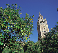 Seville's famous cathedral tower, the Giralda, rises above the trees which line the cathedral grounds; Seville, southern Spai
