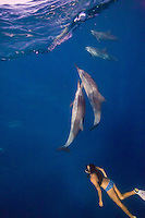 A woman encounters a pod of spinner dolphins while snorkeling off the coast of the Big Island.