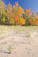 Shoreline grasses trace their wind made movements in teh sand on the shore of Lake Superior at Twelve Mile Beach in Pictured Rocks National Lakeshore, Alger County, Michigan