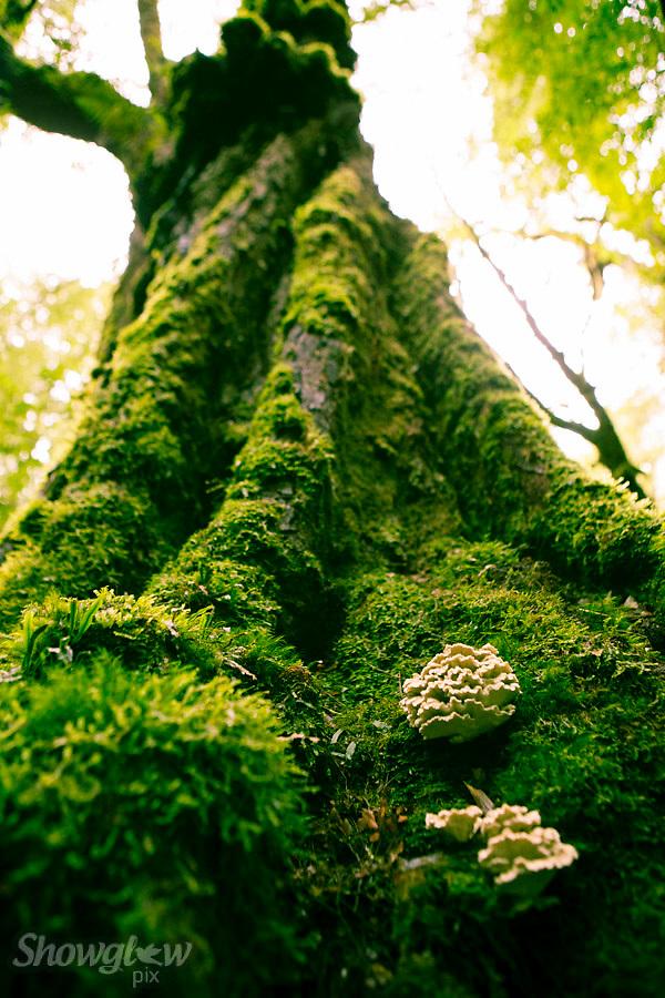 Image Ref: T63<br /> Location: Ada Tree Walk, Yarra Ranges<br /> Date: 16 July, 2016