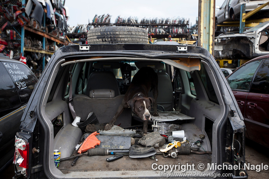 QUEENS, NY -- OCTOBER 22, 2013:  A dog guards ACDC SCrap Metal in Willets Point on October 22, 2013 in Queens.  Photographer: Michael Nagle for The New York Times