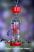 01162-08615 Ruby-throated Hummingbirds (Archilochus colubris) at Best One Hummer Feeder with red nectar protector Shelby Co.  IL
