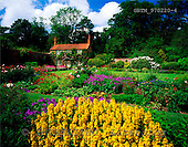 Tom Mackie, FLOWERS, photos, Gardener's Cottage, Hovetone Hall Gardens, Norfolk, England, GBTM970220-4,#F# Garten, jardín