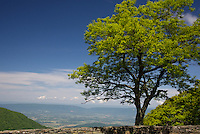 Shenandoah National Park Overlook
