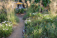 Path through meadow garden in dappled light to backyard patio with umbrella - Barbata garden, Walnut Creek, California