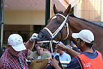 September 07, 2015. The Parx horse identifier checks tattoos as contenders enter the paddock for race 6. Undercard races and scenes around the track on Labor Day at  Parx Racing in Bensalem, PA.  (Joan Fairman Kanes/ESW/CSM)