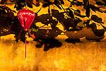 Ochre Wall Silk Lantern 02 - Red silk lantern on an ochre wall, late afternoon, Hoi An, Viet Nam.
