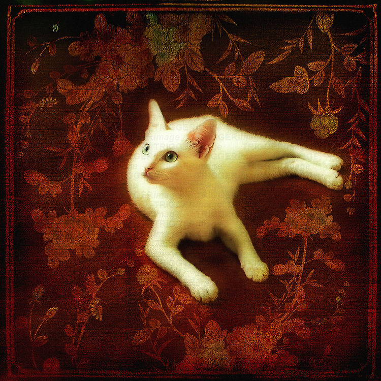 A white cat on a red background.