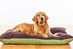 20121129 Karen XLarge Dogs