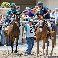HALLANDALE BEACH, FL - MAR 31:Figarella's Queen #2 trained by Gustavo Delgado with Luis Saez in the irons prepares to run and win The Sanibel Island Stakes (G3) at Gulfstream Park on March 31, 2018 in Hallandale Beach, Florida. (Photo by Bob Aaron/Eclipse Sportswire/Getty Images)