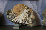 Shell fossil at Big  Water Visitor Center