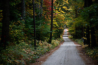 Trees with changing leaves stand above Cooleyville Road outside of Shutesbury, Massachusetts, USA.