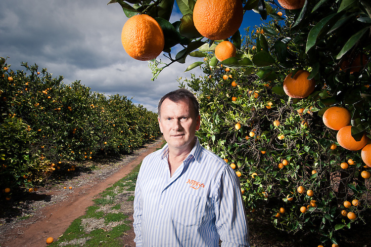 NIppys fruit Juice.The production of fruit juices. Jeff Knispel at an orchard near Wakerie , in South Australias Riverland.