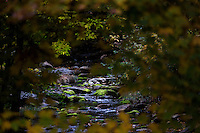 A view of Roaring Brook under changing leaves in Leverett, Massachusetts, USA.