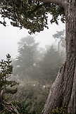 USA, California, Big Sur, Esalen, the Murphy House in the morning fog