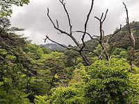 Wald beim buddhistischen Tempel Heinsa nahe Daegu, Provinz Gyeongsangnam-do, S&uuml;dkorea, Asien<br /> forest at temple heinsa near Daegu,  province Gyeongsangbuk-do, South Korea, Asia