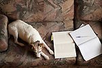 Jack Russell Terrier laying on couch with notebooks and papers