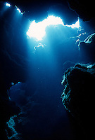 MARINE LIFE: REEFS, CAVERNS &amp; DIVERS<br />