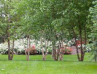 Summer Garden, New Jersey
