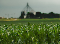 Corn grows in field adjacent to grain storage mill