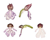 Lady Orchid - Orchid purpurea (top row - Oxfordshire, bottom row - Kent)