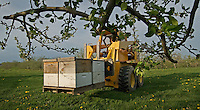 Joe Blair delivers flats of bees to Lynds Fruit Farm near Pataskala, Ohio, Monday, April 30, 2007. Blair, the largest bee supplier in Ohio, lost more than 1,100 hives over the winter to colony collapse disorder. Added to his business woes is a cold spring that damaged many orchards that no longer need as many bees. Blair delivered 48 hives to Lynds which normally needs 200.
