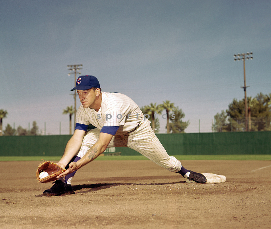 Chicago Cubs Dale Long (8) portrait from his 1960 season with the Chicago Cubs.  Dale Long played for 10 season, with 6 different teams and was a 1-time All-Star.(SportPics)