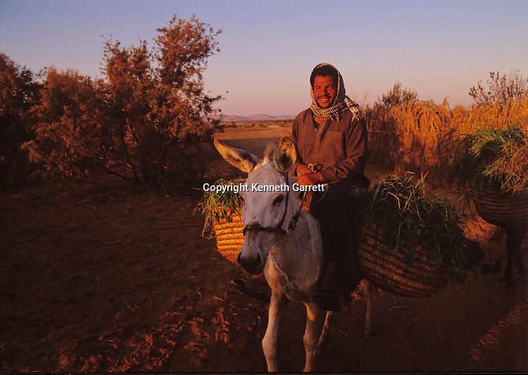 Farmer with baskets of greens rides donkey, Egypt; Archaeology; Bahariya Oasis; Greco-Roman;Golden Mummies; Valley of the Golden Mummies; Book originals; mummies