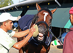Maximum Security tries to grab the sponge as groom Milton Hernandez cleans his face after a morning gallop at Monmouth Park in Oceanport, New Jersey on Saturday May 18, 2019.  Maximum Security will make his way to the paddock around 2:20pm today to school in the paddock for his fan base to see him.  Photo By Bill Denver/EQUI-PHOTO
