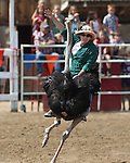 Kristy Bond rides in an ostrich race at the International Camel Races in Virginia City, Nev., on Friday, Sept. 9, 2011. .Photo by Cathleen Allison
