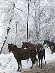 Caballos de Farellones / Farellones, Chile.<br /> <br /> Horses of Farellones / Farellones, Chile.