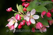 Gisela, FLOWERS, BLUMEN, FLORES, photos+++++,DTGK1907,#f#
