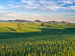 Whitman County, WA      <br /> Dirt road winds thru the green Palouse hills with an isolated windmill near the town of Palouse