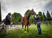 LOUISVILLE, KY - MAY 03: Trainer, Richard Mandella inspects Paradise Woods after her gallop at Churchill Downs on May 03, 2017 in Louisville, Kentucky. (Photo by Alex Evers/Eclipse Sportswire/Getty Images)