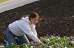 Malessa Hilton from Pleasant Grove, Utah is student majoring in Graphic Design. She gets ready to plant pansies in front of the HBLL at 9:00am....Photo by Annie Jones/BYU