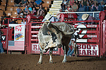Longhorn during second round of the Fort Worth Stockyards Pro Rodeo event in Fort Worth, TX - 8.17.2019 Photo by Christopher Thompson