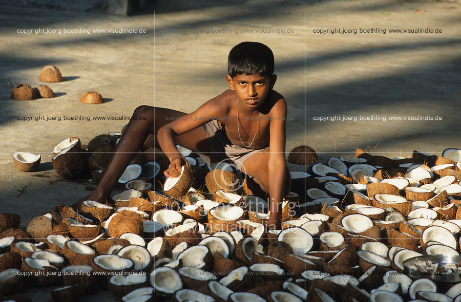 INDIEN Karnataka, Trocknung von Kokosnuessen in Sonne auf Plantage bei Mangalore , aus dem Kokosfleisch, Kopra, wird anschliessend Kokosoel gepresst / INDIA, boy drying coconut in sun at farm near Mangalore, from copra later coconut oil will be pressed