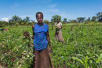 N. Uganda, Gwendiya, Gulu District. One of PCAF's main programs focuses on work programs that help patients and their families overcome depression by earning income and engaging with their community. Most everyone here is being treated for mental distress or trauma and finds strength in working together in agricultural livelihood as a community. This woman suffered when her husband was killed during the war and works with her brother and nephew in the fields.