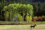 Eastern Washington with fall colors and a horse standing in field Eastern Washington State USA