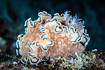 Nudibranch (Glossodoris hikuerensis) on coral at a depth of 10 metres, Florida Islands, Solomons