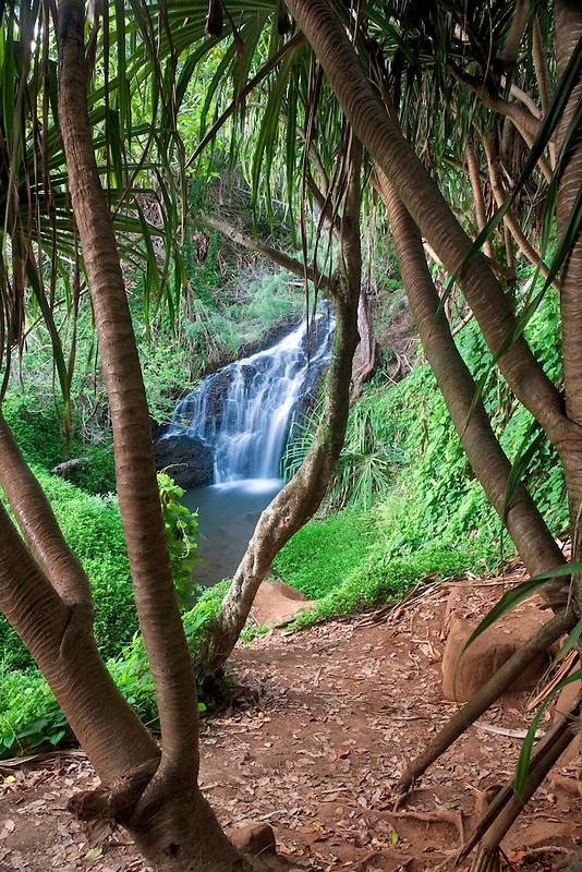 Upper Queen's Bath Falls. Kauai, Hawaii.
