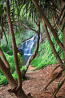 Upper Queen's Bath Falls. Kauai, Hawaii.