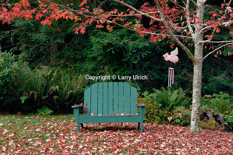Adirondack chair<br />   and red maple<br /> Humboldt County<br /> California