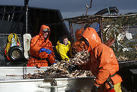 10/20/03 crab NWS::  Crewmen on board the F/V Exito ready a crab pot to be stacked onboard while red king crab fishing in Bristol Bay. The season lasted 5 days and 2 hours and was plagued with gale force winds of 35 knots or higher almost everyday.