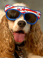 A dog wears patriotic glasses during the annual Fourth of July Celebration and community parade in Birkdale Village in Huntersville, NC. Birkdale Village combines the best of shopping, dining, apartments and entertainment venues within a 52-acre mixed-use development.