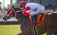 HALLANDALE BEACH, FL - JANUARY 27: Oscar Nominated #8, with Jose Ortiz riding, wins the W.L. McKnight Stakes on Pegasus World Cup Invitational Day at Gulfstream Park Race Track on January 27, 2018 in Hallandale Beach, Florida. (Photo by Kazushi Ishida/Eclipse Sportswire/Getty Images)