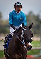 ARCADIA, CA - FEBRUARY 04: St. Joe Bay #3, ridden by Kent Desormeuax wins in the Palos Verdes Stakes at Santa Anita Park on February 4, 2017 in Arcadia, California. (Photo by Zoe Metz/Eclipse Sportswire/Getty Images)