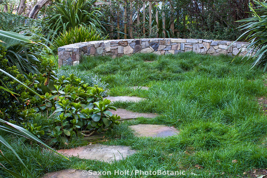 Carex divulsa, Carex pansa, sedge lawn meadow framed by low stone wall for seating with stepping stone path and succulent Cotyledon orbiculata macrantha (left), blue mist of myosotis; McAvoy Garden - California summer-dry garden; Ground Studio Landscape Architecture