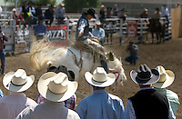 Potential buyers, in foreground, watch, a saddle bronc buck during the Miles City Bucking Horse Sale at the Eastern Montana Fairgrounds in Miles City Montana Sat., May 19, 2007. Saddle broncs and bareback broncs are auctioned off after they are bucked.